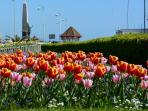 Bexhill in Bloom
