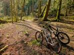 Hire a bike and have fun cycling in Haldon Forest