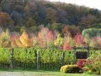 Late Fall on the escarpment: harvest season