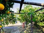 You will walk through a garden filled with orange trees, filling the air with gorgeous scent.