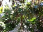 Your own tropical garden to enjoy