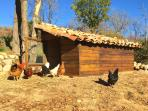 Cal Pesolet Eco Turisme Rural Henhouse