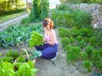Hort Ecològic a Cal Pesolet Eco Turisme Rural