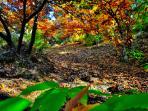 Entorno con bosques de castaños