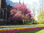 The Cathedral Garden is a romantic setting in spring bloom