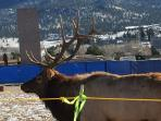 Estes Park.  This is not a fence.  It just keeps the elk our of where they shouldn't be.