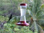 mangeoire à Colibri sur la terrasse
