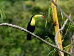Our most beautiful visitors, the amazing toucans!