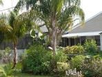 Rear Tropical Garden