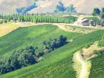 Casa Bianca is in the middle of award-winning vineyards, with cantina and wine shop close by.