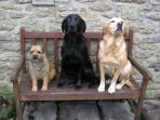 Our dogs! They are well-behaved and social (but we can keep them out of your way if you prefer!)