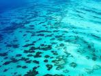 Reef half mile off shore