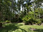 Lofty Queensland garden