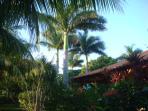 Royal palms reach for the sky...