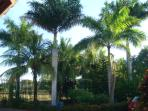 Dozens of coconut, Royal and Miami palm trees throughout the property.