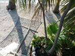 Hammock under the palm fronds