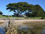 Absolute water frontage on  Pelican Lagoon, shaded by enormous Moreton Bay Figs.
