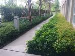Greenery side walk.