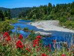 National Scenic Hwy 199 follows the Smith River.