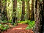 Redwood State and National Parks only 11 miles from The Cabin.