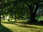 parc et arbres centenaires.