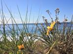 Spring Flowers at Strand Beach