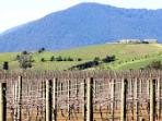 The yarra valley roling hills and beautiful vineyards.