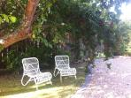 Reclining in the plum tree garden is a treat with the ripe plums for picking
