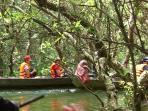 promenade dans les mangroves