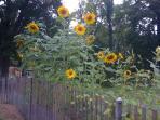 Summer at Blue Hill