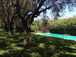 Swimming Pool in the Olive Grove