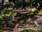 Picnic table under the rare cedar trees