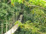 THE POINT HOUSE Monkeys playing on Canopy bridge