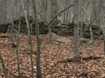 do you see the ruffed grouse?