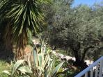 Descend to the beach via the path through our olive grove.