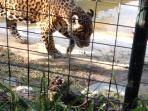 Zoológico a 1:45 minutos casi en su hábitat Natural.