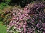 Flowers in the Front Garden