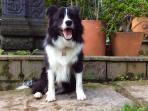 Oscar, a very happy dog