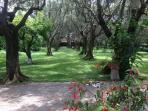 Olive Grove from the Entrance