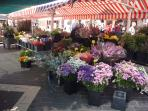 The Old Flower Market of Nice (The Course Salaya) is literally across the square from our apartment.