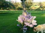 Bring your pooch, lovely scents in the orchard!