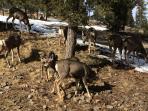 Deer walk up for feeding
