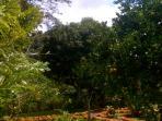 ...all varieties of tropical fruit trees