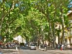 famous Cours Mirabeau