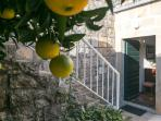 Entrance to the Guest House with Ripening Oranges (Photo taken in Early November 2015)