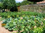 Our organic vegetables garden