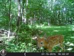 We see many fawns sometimes I walk up on them in the woods