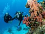 Wonderful diving.