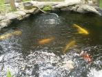Koi Fish pond.