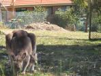 Kangas and joeys year round, in the garden!!